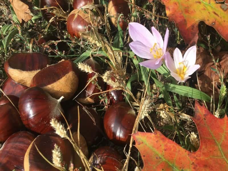 Eventi d'autunno
